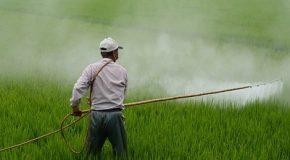 Pesticides : les biocides bientôt sous clé?