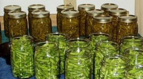 Contamination alimentaire toxique : rappel massif de haricots verts