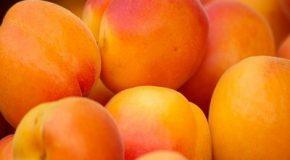Alimentation L'abricot bientôt hors circuit court ?