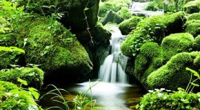 Protection des cours d'eau : un rapport officiel confirme l'analyse inquiétante de Que Choisir