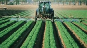 Pesticides : les Sages sanctionnent une concertation locale biaisée