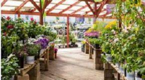 Obligation d'information sur les plantes à risques pour la santé
